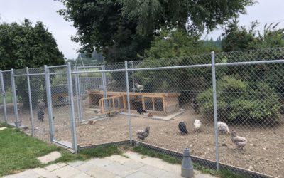 Hühnervilla bauen